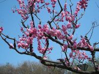 やっと春ですね~。